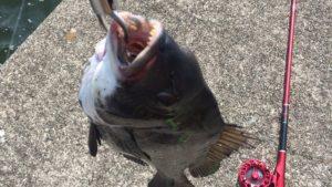 まずは仕掛けから黒鯛チヌ落とし込みヘチ釣りを始めよう 入門編